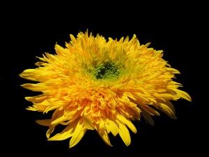 plain old flower