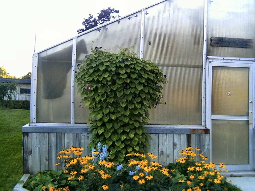 Greenhouse Plans. Insider Secrets to Building Your Own Greenhouse
